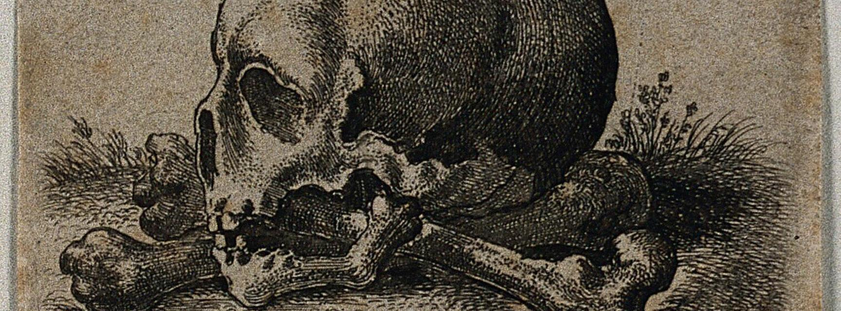 A skull in profile view, resting on two crossed femurs. Etching by Wenceslaus Hollar, 1652